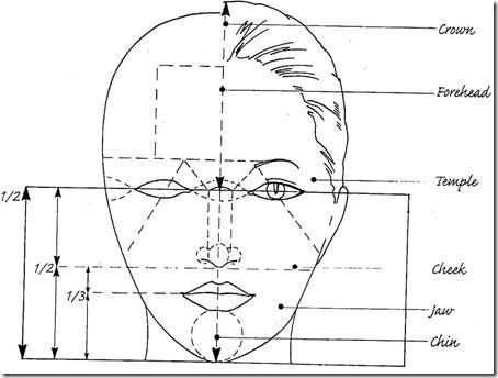 Facial proportions - Five eyes make up the width of a ...