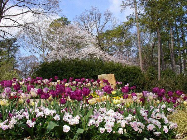 647d5fffdf3207d7bce5541646b6c365 - Birmingham Botanical Gardens Spring Plant Sale