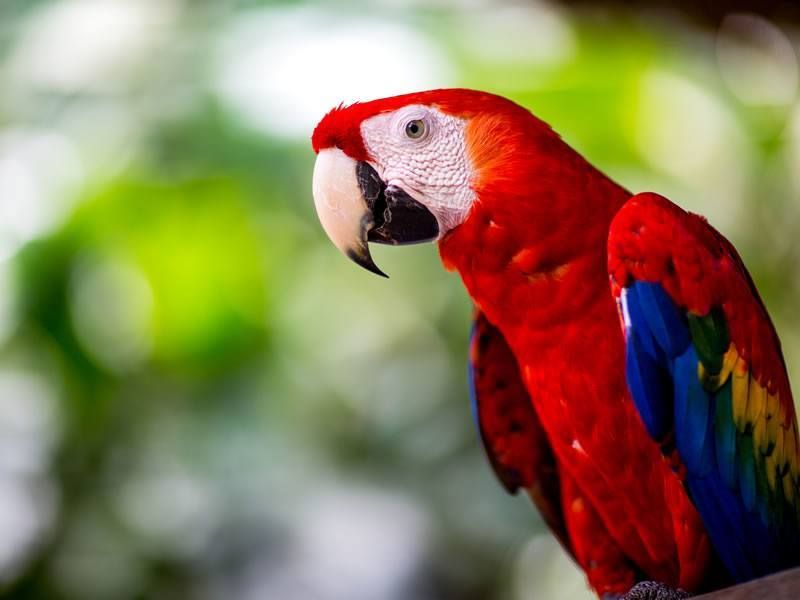 16++ National animal of costa rica ideas