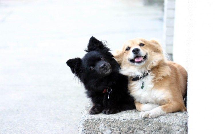 Fonds Decran Animaux Fonds Decran Chiens Chipette Et Cocotte Par Noranda Hebus Com Chien Animaux Animales
