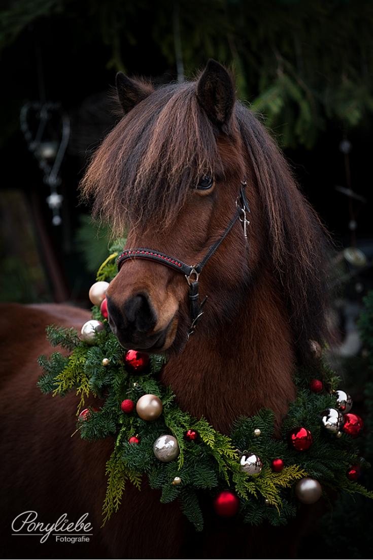 weihnachten ist auch f r die pferdefotografie eine. Black Bedroom Furniture Sets. Home Design Ideas