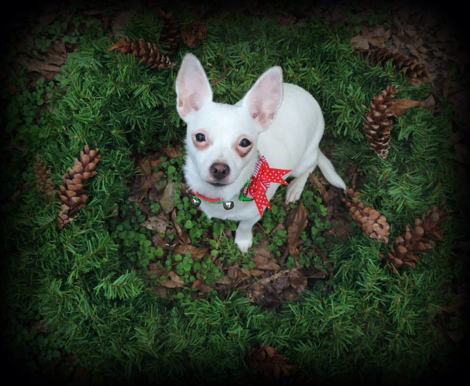 Christmas rescuedog (With images) Rescue dogs, Dog cat
