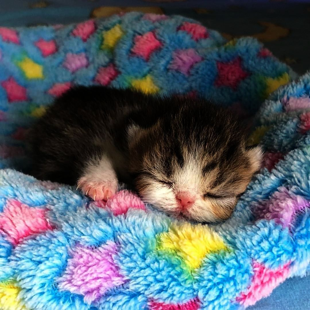 So You Re Not My Real Mom Cats And Kittens Kittens Cutest