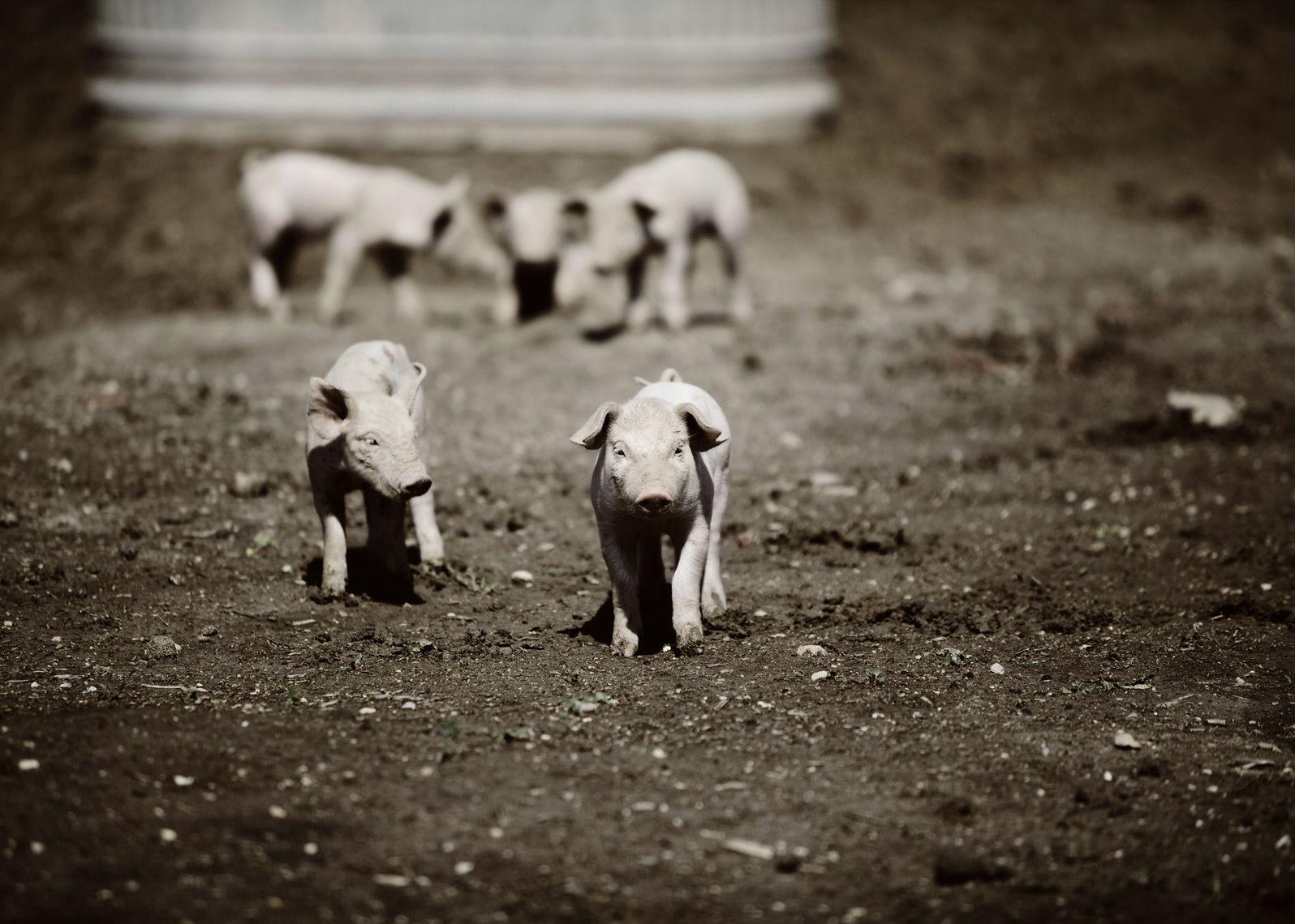 farm-I-004 | Jennifer Silverberg Photography