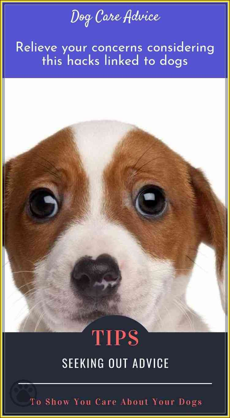 Allay Your Concerns With This Dog Care Advice Dog Care Elderly Dog Care Canine Care