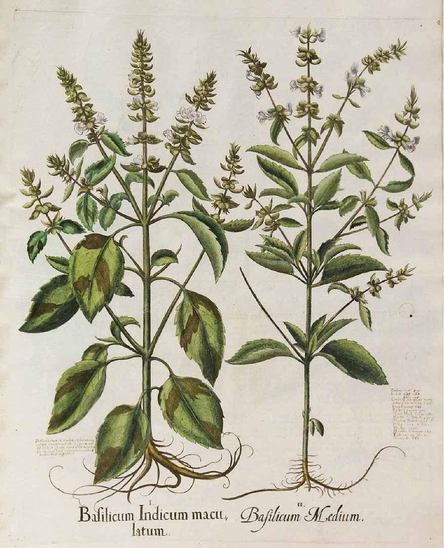 Pin Di Product Bureau Su Botanical Illustration