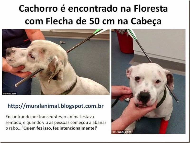 Mural Animal: Cachorro é encontrado na Floresta com Flecha de 50...