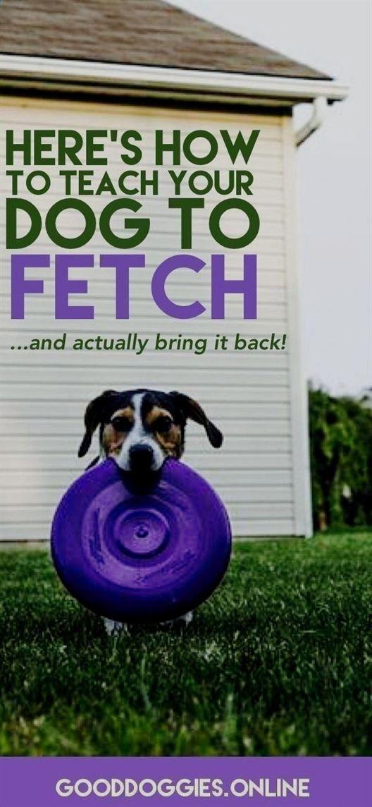 Pin On Dog Training Clicker