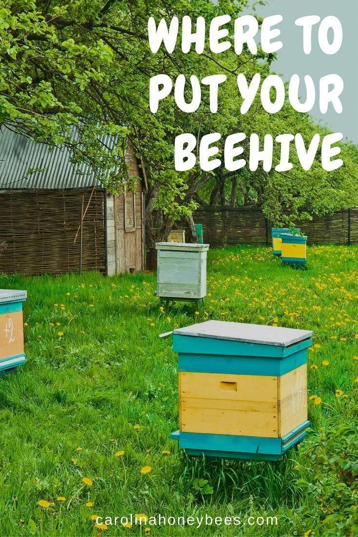 Where to put your beehive. You dont have to have a lot of ...