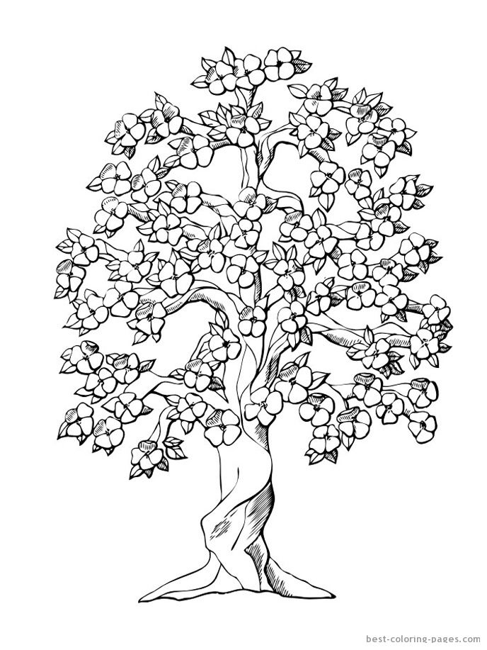 Cherry Blossom Tree Tree Coloring Page Flower Coloring Pages Coloring Pages