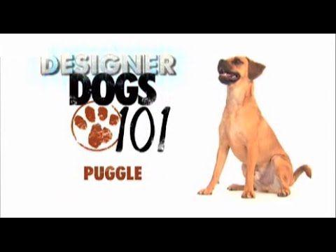 Dogs 101 Puggle Eng Youtube Dogs 101 Dogs Dog Breeds