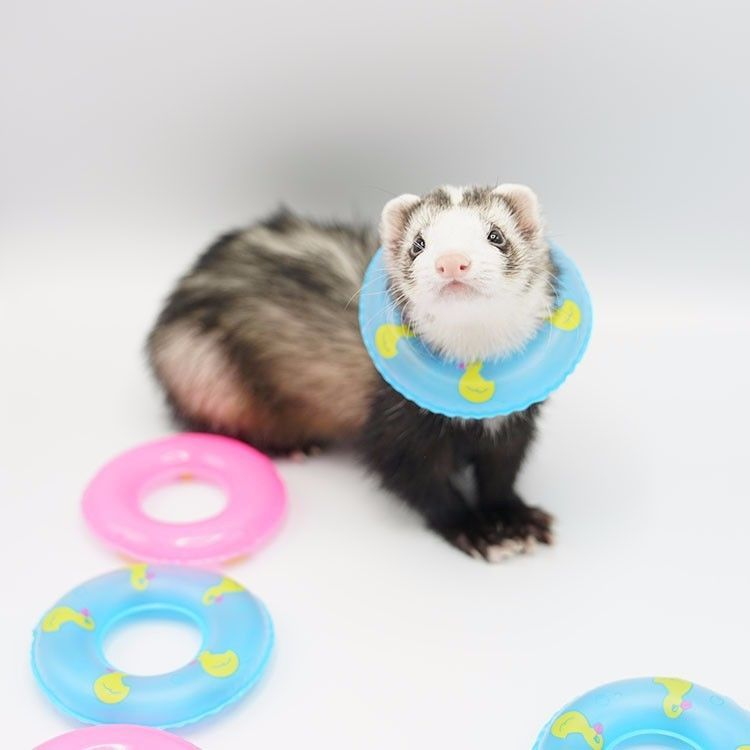 Details About Ferret Floatie Small Animal Swim Ring Small Pets Pet Ferret Ferret