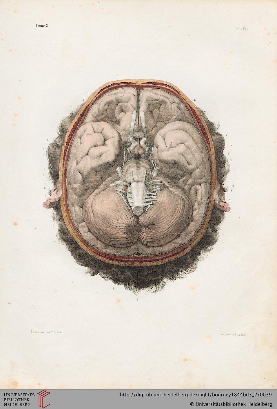 Bourgery, Jean Baptiste Marc ; Jacob, Nicolas Henri [Hrsg.] Traité ...