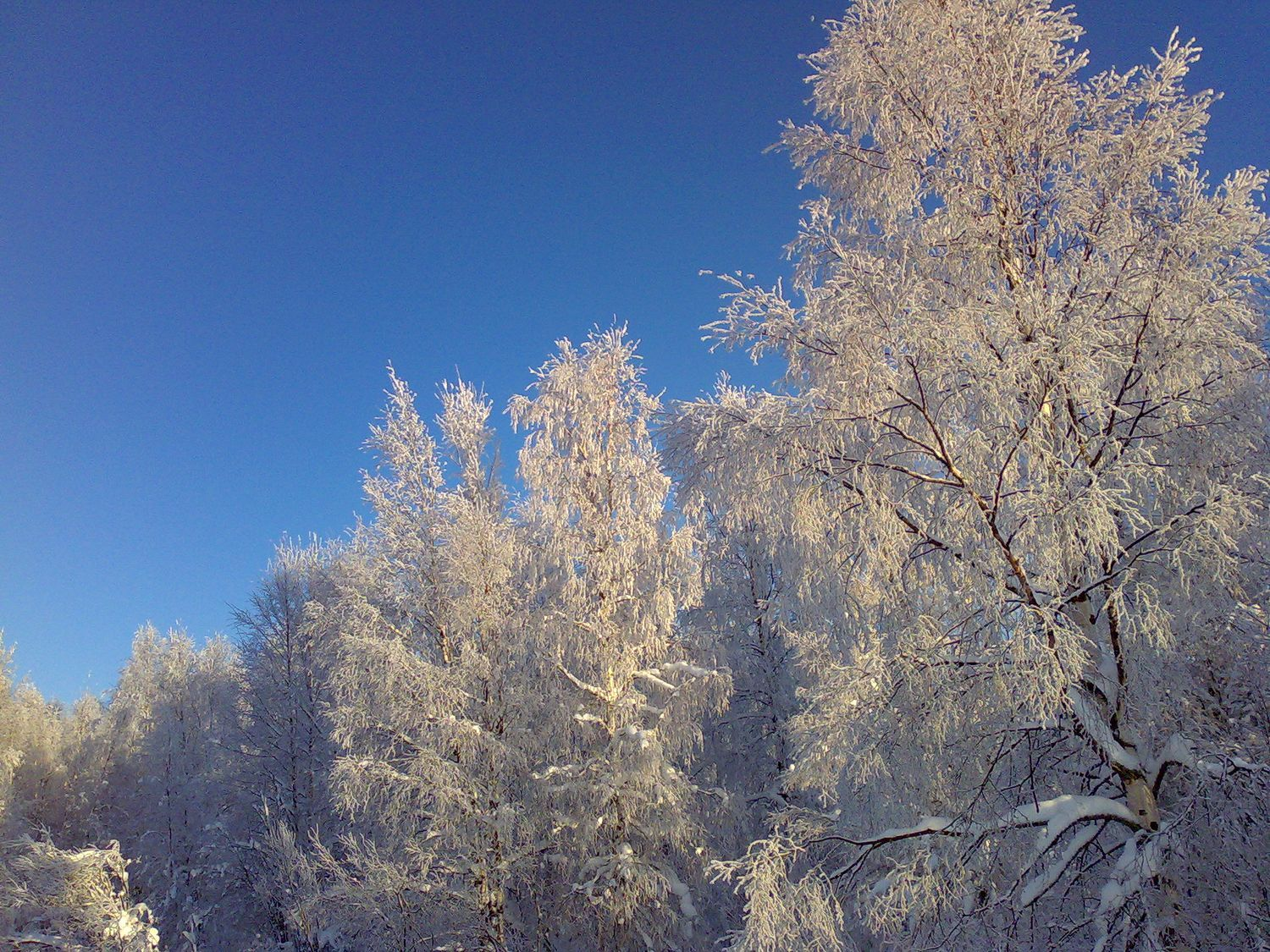 We get a few more frosty weather in January. Photo by Eila Ylonen