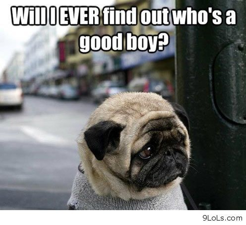 Funny dog quotes for kids - photo#38