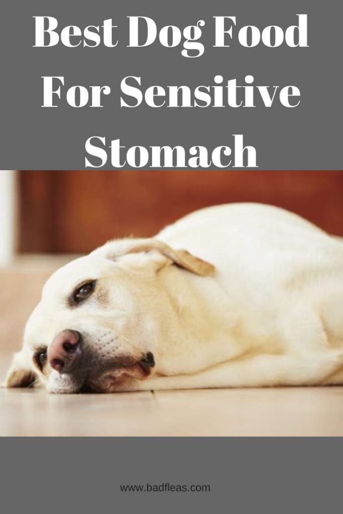 Best Dog Food For Sensitive Stomach Dog Food Recipes Best Dog Food Sensitive Stomach