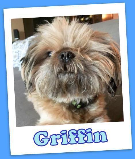 Adopt Griffin On Pets Kitten Adoption Dog Adoption
