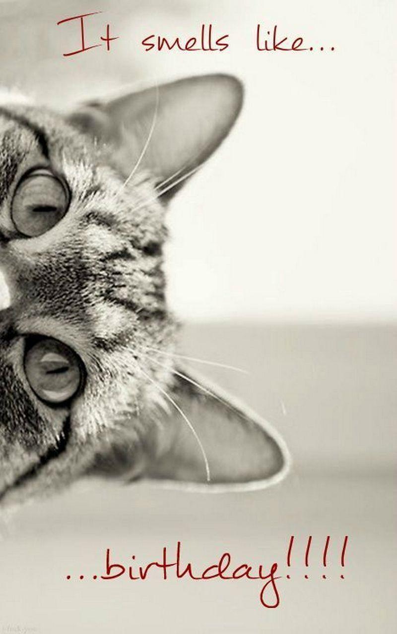 Happy Birthday Funny Grumpy Cat - Bing images