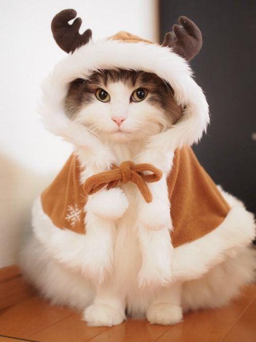 Kittenworld__ (@Kittenworld8)