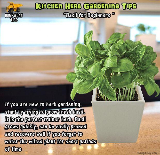 Kitchen Herb Gardens That Will Make Cooking Wonderful: Amazing Kitchen Herb Garden Tips - 20 Pics