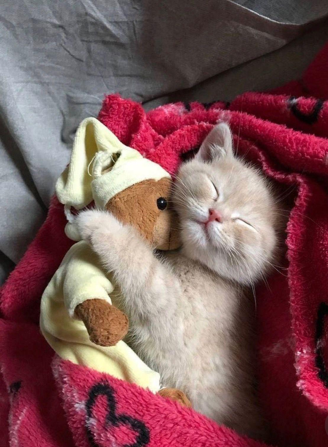 Kittens Cutest Cute Baby Animals Cute Cats