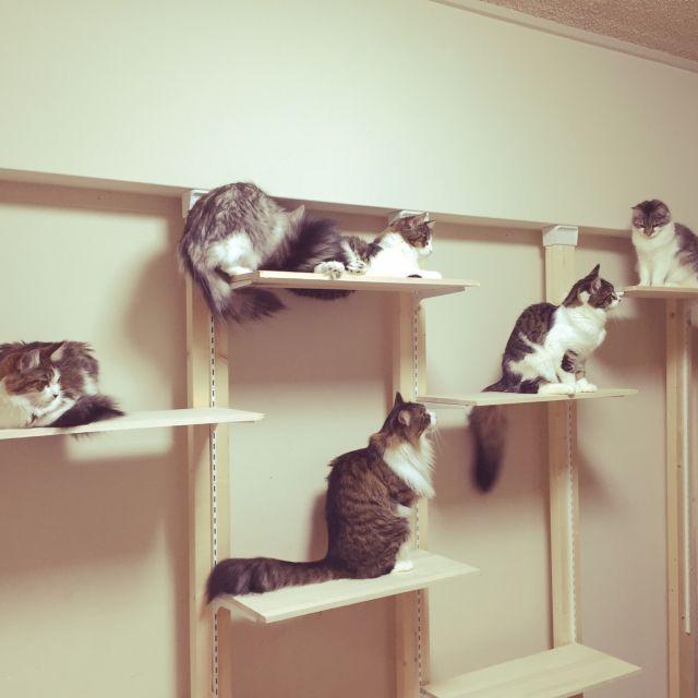 ディアウォールなら叶う Diyで素敵な棚作りアイデア12選 Folk きゃっとウォーク 猫の家具 ディアウォール