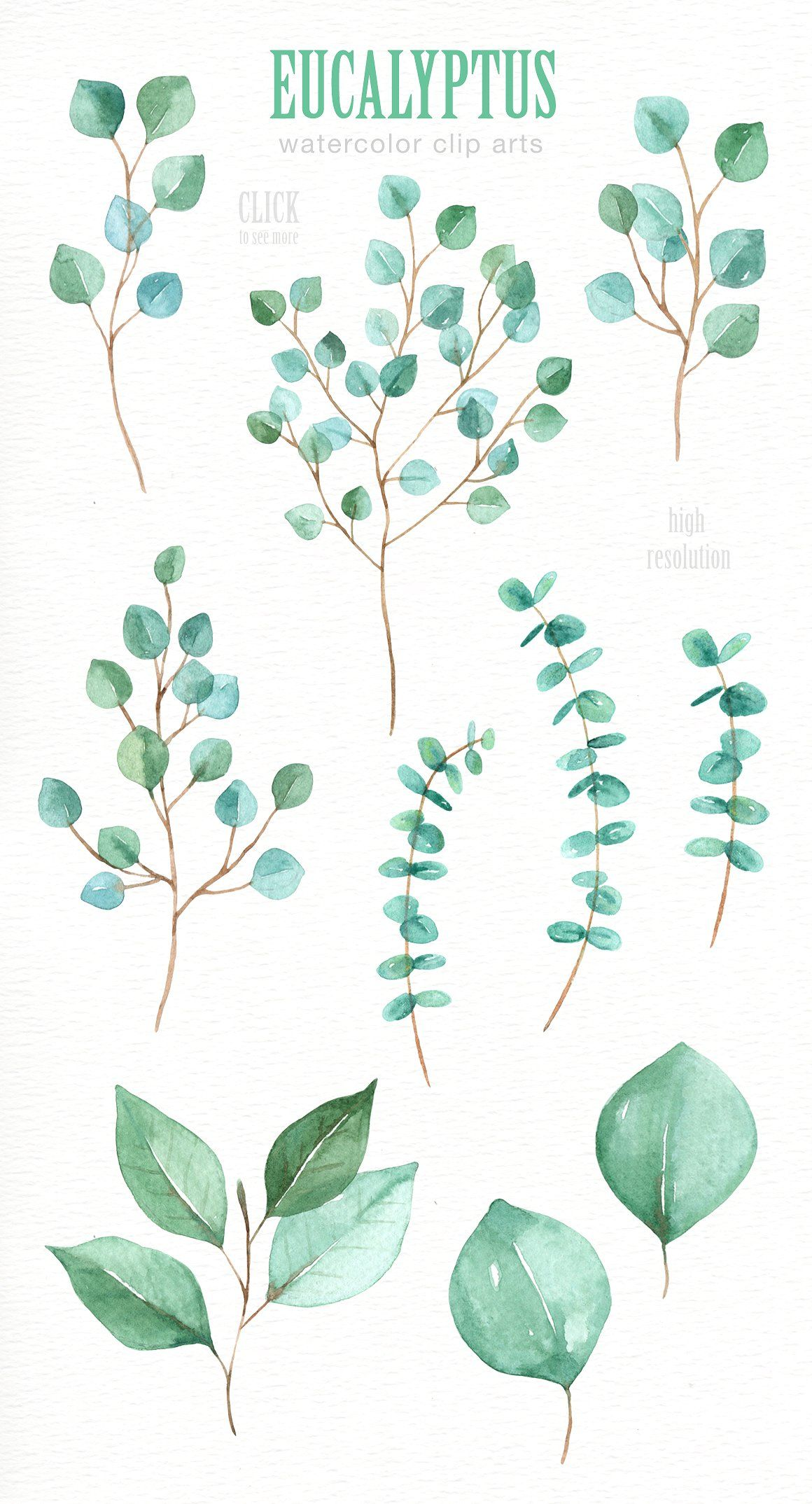 Eucalyptus Leaf Watercolor Clipart By Everysunsun On