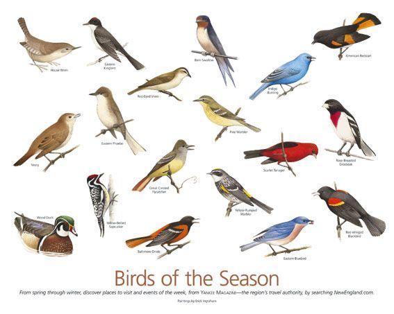 Birds of New England