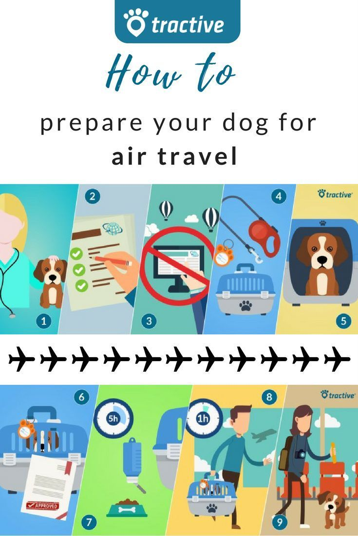 Flying with dog Here's how to prepare! in 2020 Flying