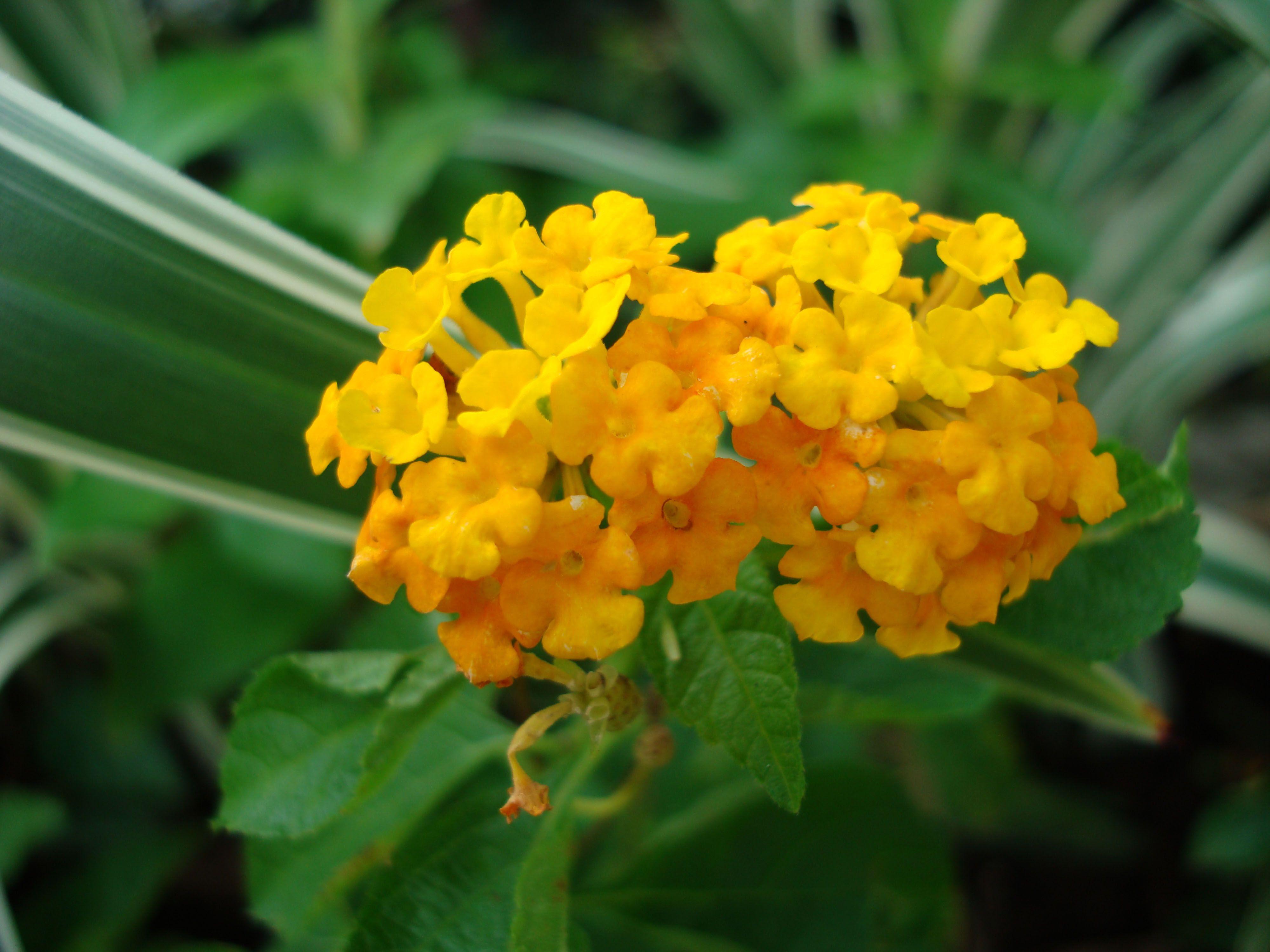 Tropical Garden Flowers Ayala Alabang Manila Philippines 047
