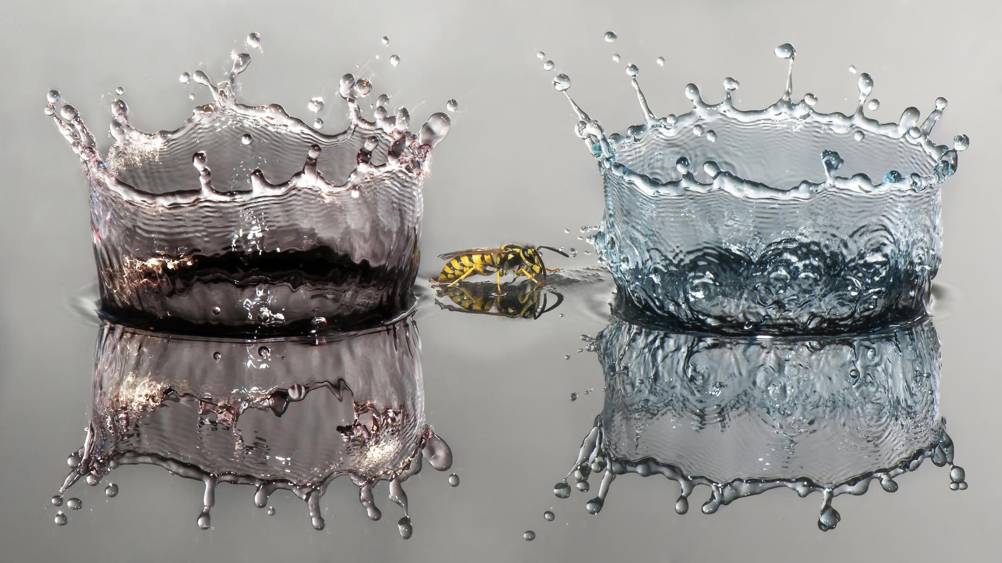 2 Water crowns and wasp - null