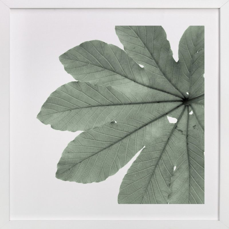 Leaf in green photography limited edition art print by