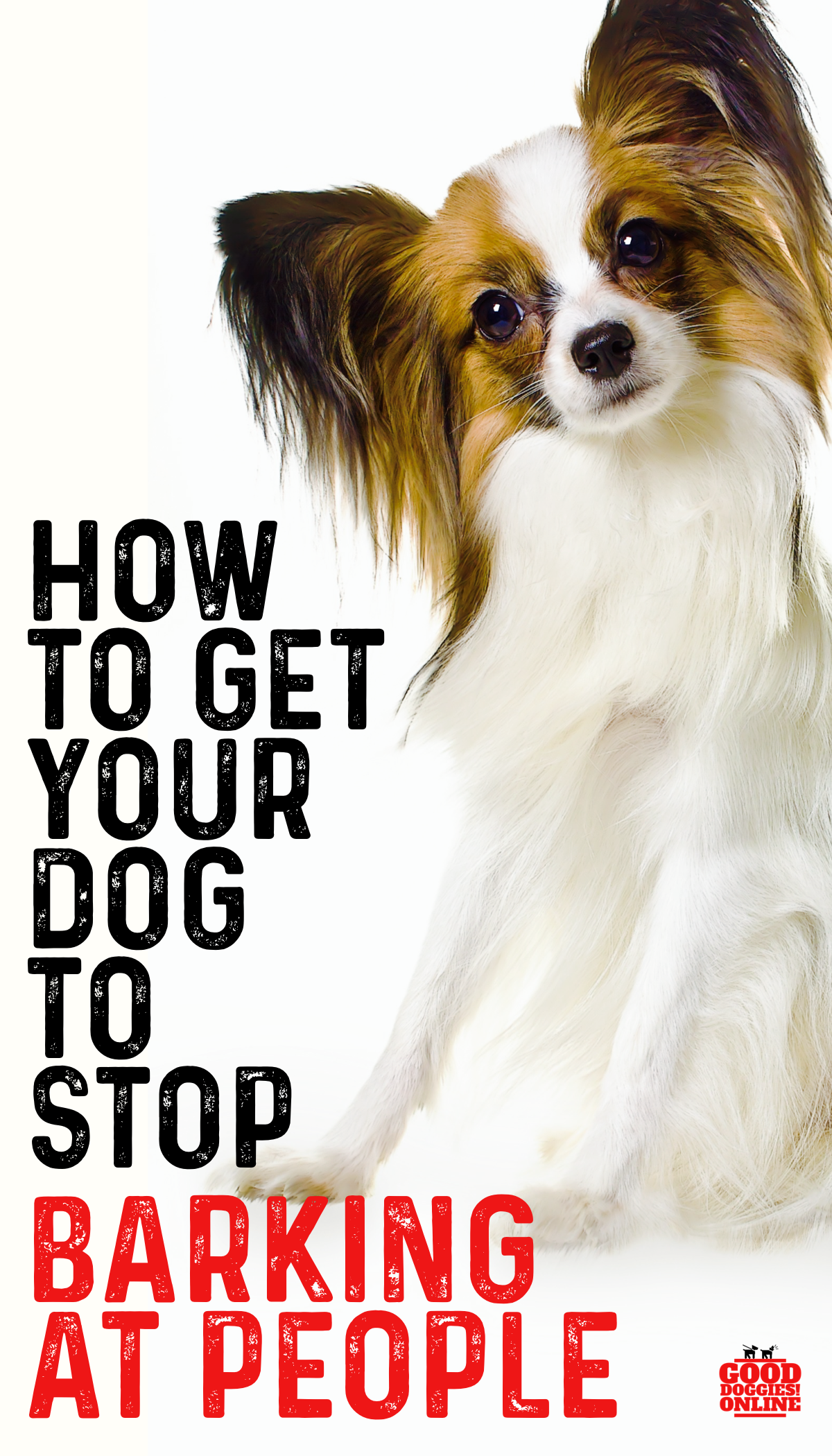 Top 5 Tips On How To Get A Dog To Stop Barking Good Diggies Online Dog Training Tips Easiest Dogs To Train Dog Training