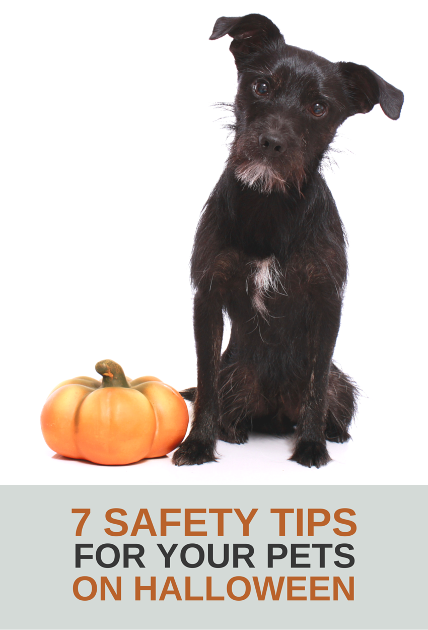 Halloween Safety Tips For Your Dog Halloween Safety Tips Halloween Safety Halloween Pet Safety