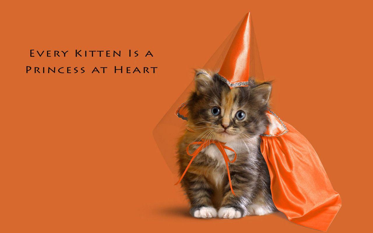 Most Inspiring Wallpaper Halloween Kitten - 6487d6f52a2ef6fe4377df2c9ca2dbcd  Snapshot_866480.jpg
