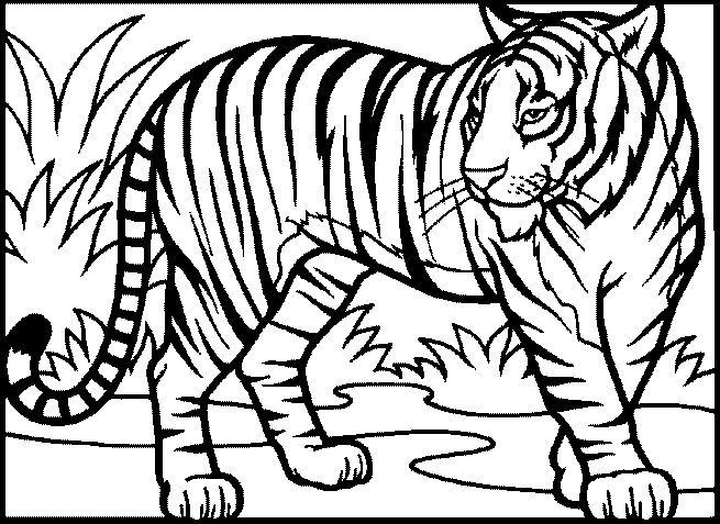ausmalbilder tiger