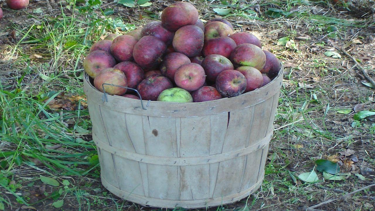 Planting Heirloom Apple Trees on the Small Farm - The Farm Hand\'s ...