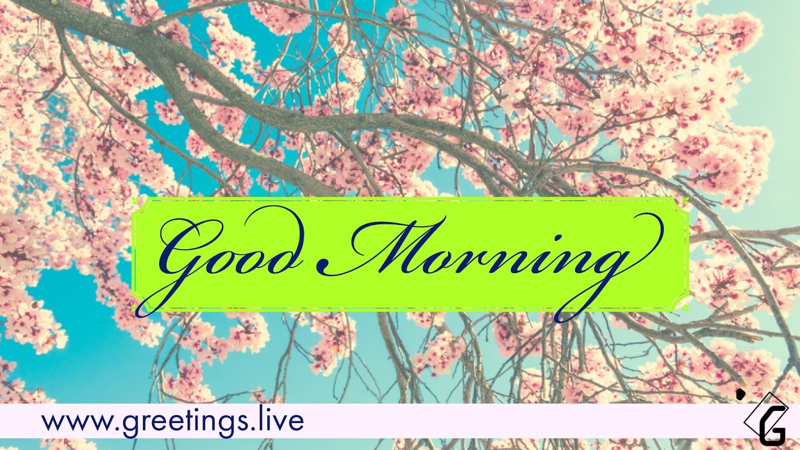 Free Good Morning Greeting Hd Picture Messages Good Morning