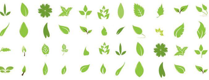 Green Leaves, free vectors - 365PSD.com