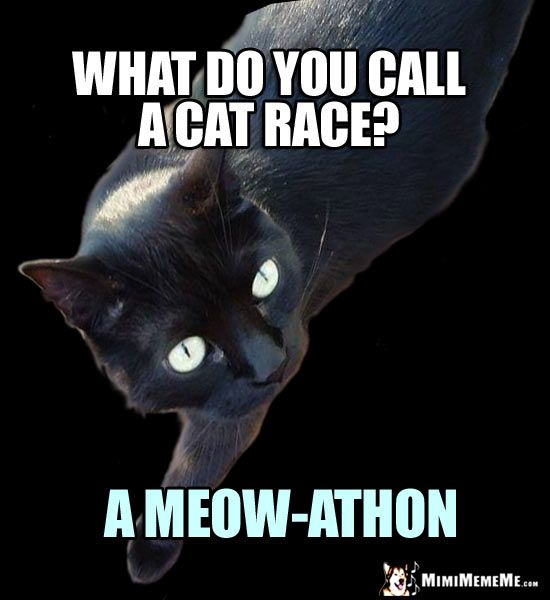 Cat Riddle What Do You Call A Cat Race A Meow Athon Cat Jokes Cat Lover Quote Cat Memes