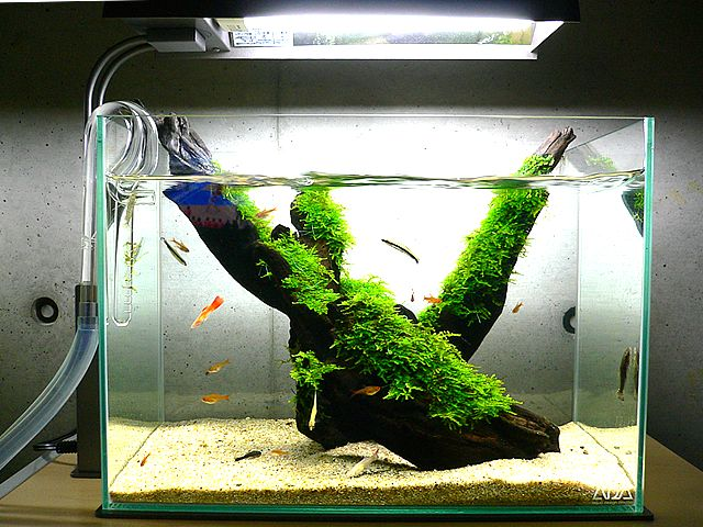 simple. makes me think shrimp | Aquascape, Aquarium ...