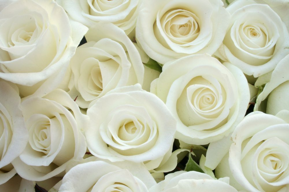 White Roses HD Wallpapers Free Download | White roses ...