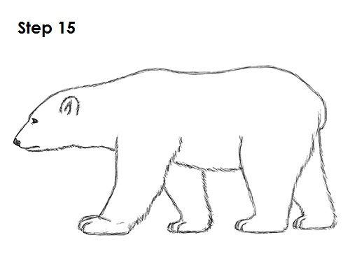 Polar Bear Drawing 15 Bears Bear Drawing Polar Bear