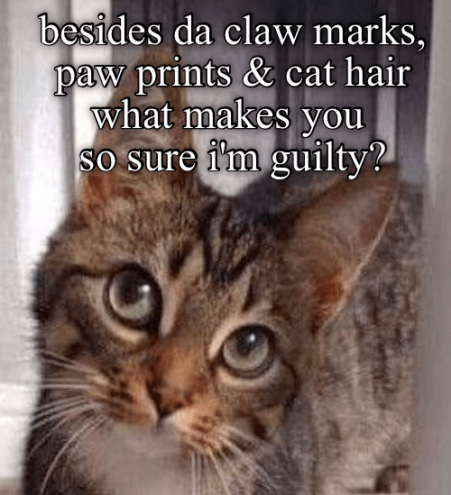 Slightly Incriminating Evidence Cats Funny Cats Funny Cat Memes