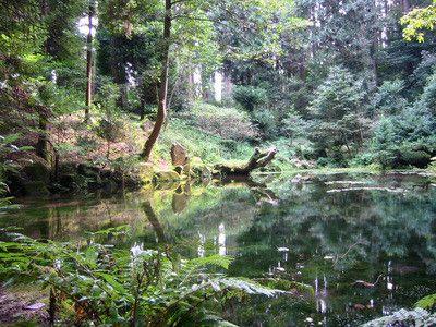 赤蔵山憩いの森 御手洗池 みたらし池 住所 石川県七尾市三引町154 9 1 自然人ネット 御手洗 森 池