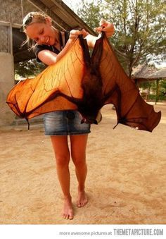 bat nest in house - Recherche Google   witchy   Pinterest   Nests ...