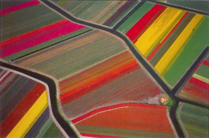 Tulip fields Netherlands Tulip fields Netherlands