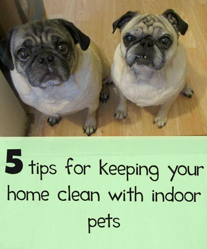 5 Tips For Families With Indoor Pets To Keep Their Homes Clean