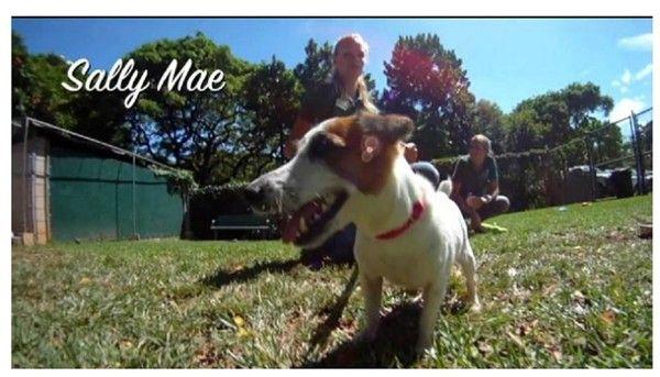 Senior Dog Adopted From Shelter And Offered For Sale On Craigslist The Same Day Senior Dog Dog Adoption Dogs