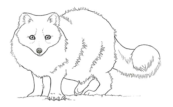 Pin By Tocolor On Artic Fox Coloring Pages Fox Coloring Page Animal Coloring Pages Puppy Coloring Pages
